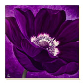 Purple Passion II